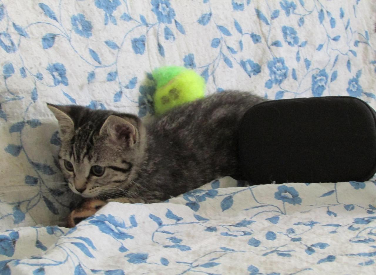JYA - F - Née le 23/05/2014 - Adoptée en Septembre 2014