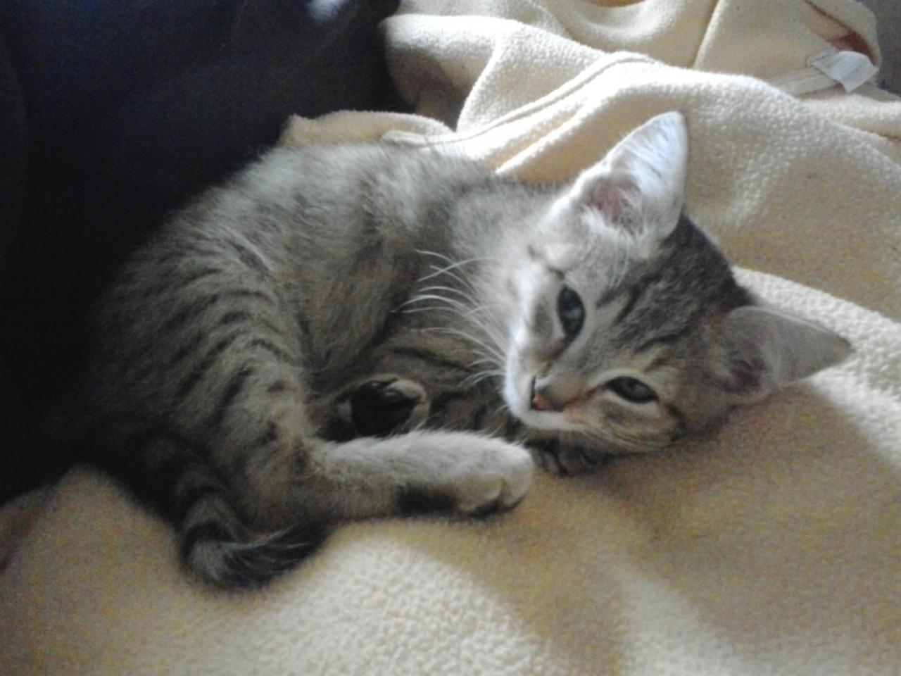 JYO - M - Né le 15/09/2014 - Adopté en décembre 2014