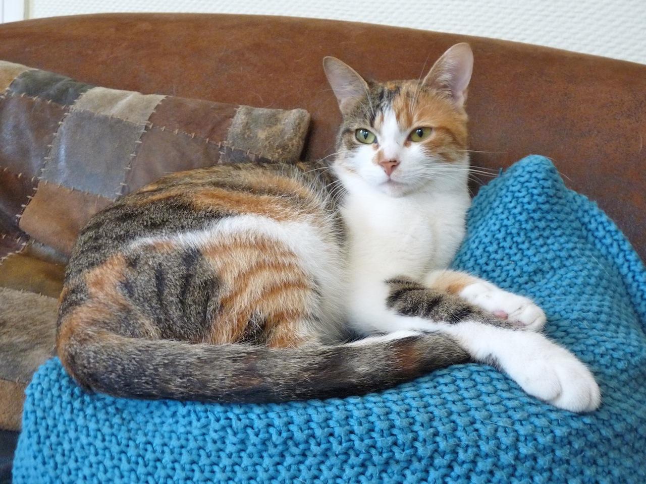 LALIE - F - Née le 01/08/2013 - Adoptée en nov 2015