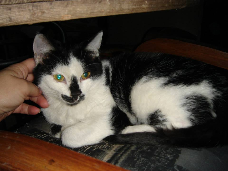 LARGO - M - Né le 10/10/2014 - Adopté en mars 2015