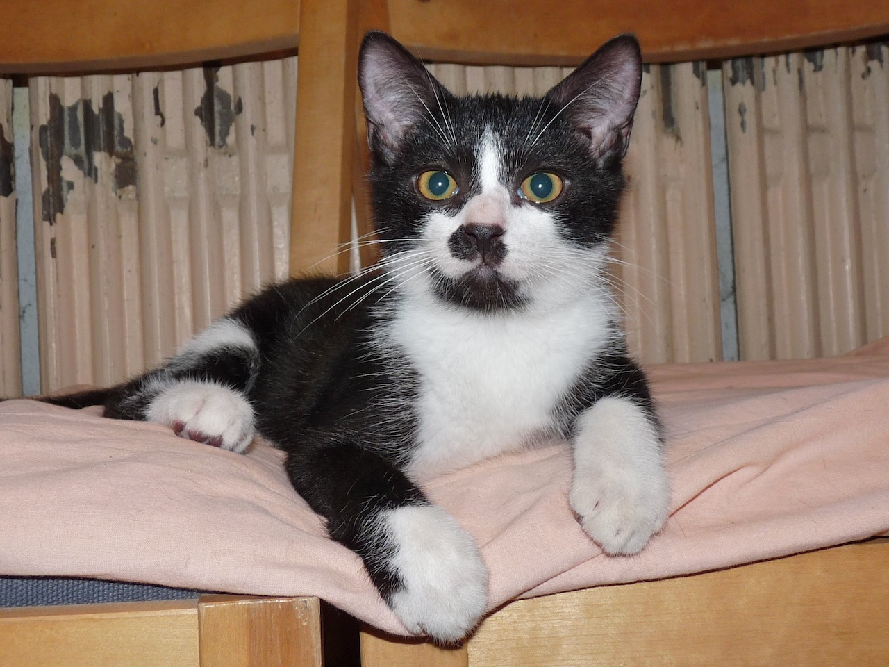 LARRY - M - Né le 01/05/2015 - Adopté en août 2015