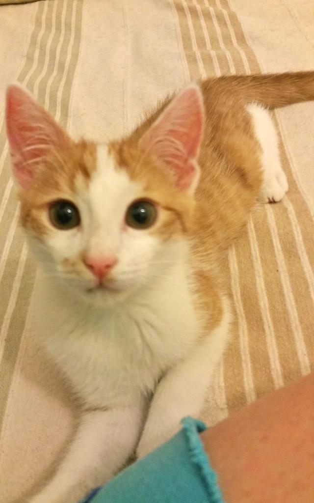 LASTICO - M - Né le 10/05/2015 - Adopté en sept 2015