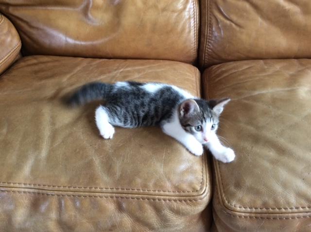 LAURETTE - F - Née le 01/05/15 - Adoptée en août 2015