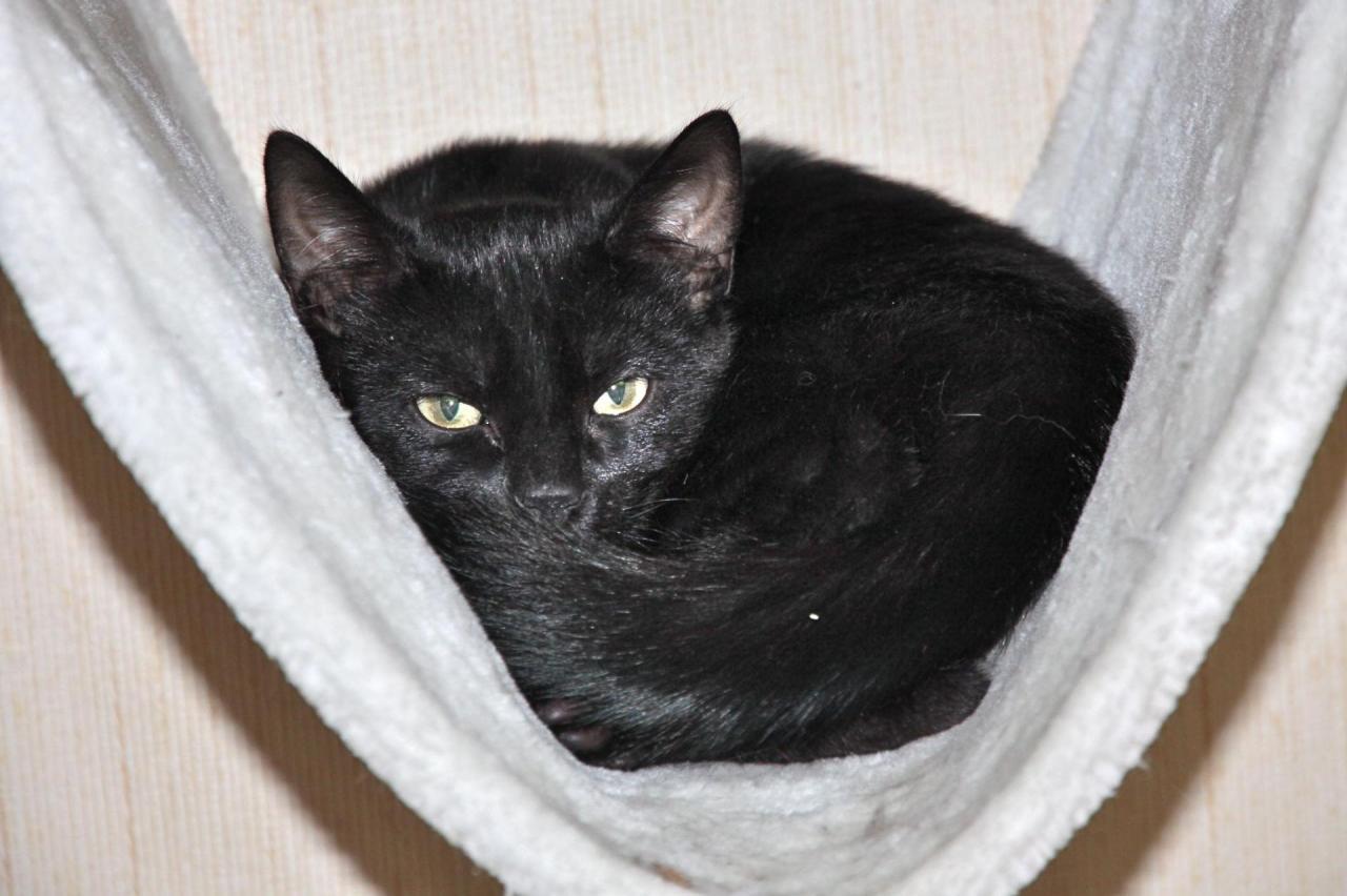 LAYAN - M - Né le 01/06/2015 - Adopté en mars 2016