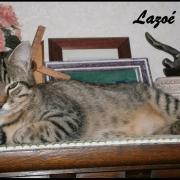 LAZOE - F - Née le 01/10/2015 - Adoptée en Janvier 2017