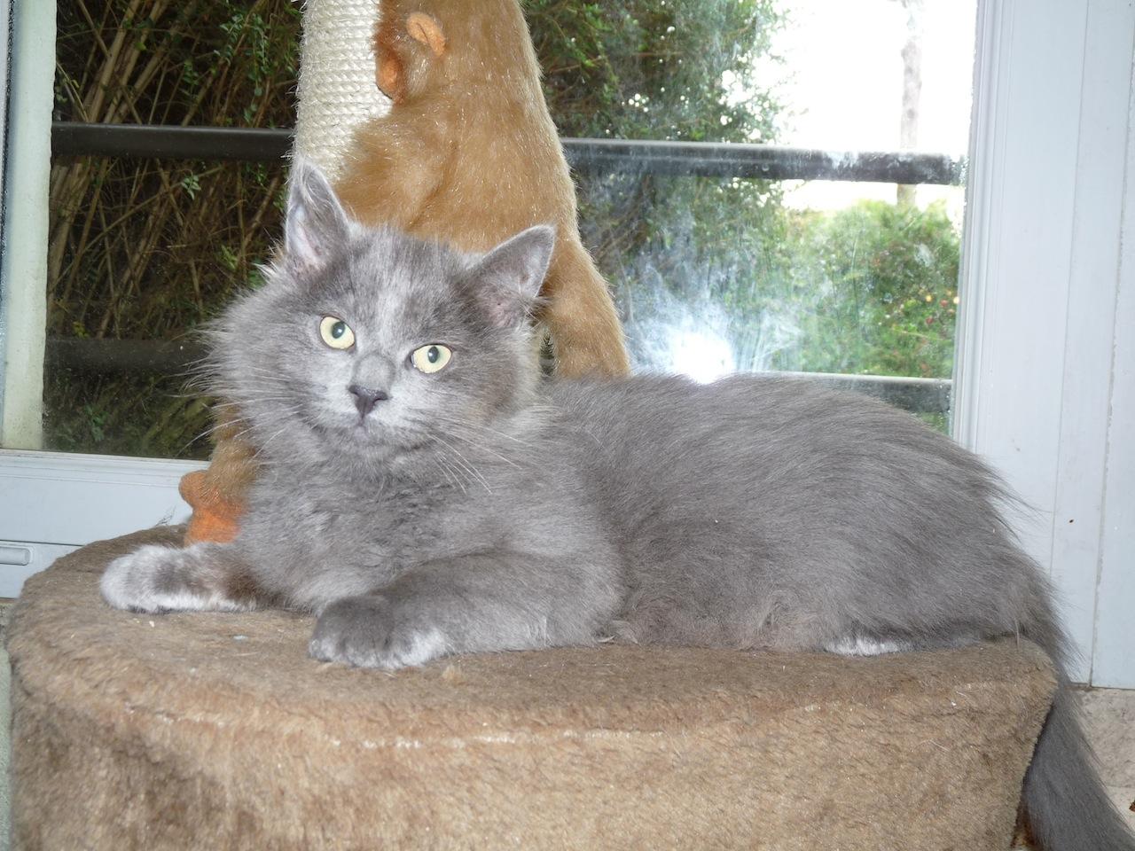LAZZIO - M - Né le 15/06/2015 - Adopté en déc 2015