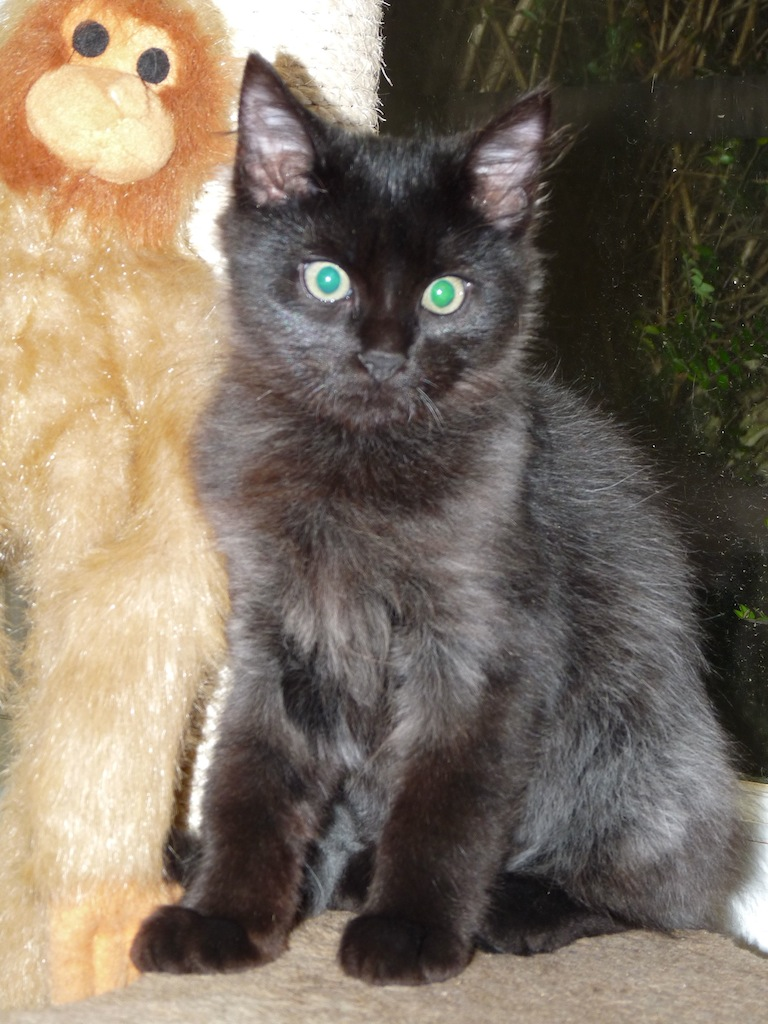 LENNON - M - Né le 15/06/2015 - Adopté en nov 2015