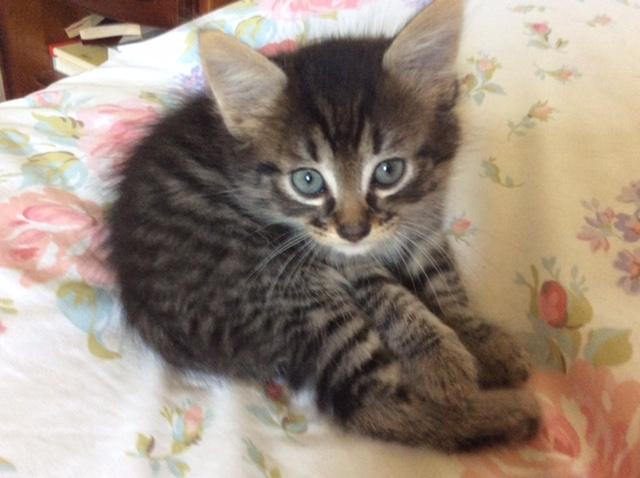 LENY - M - Né le 01/05/2015 - Adopté en juillet 2015