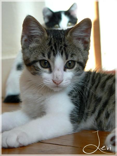 LEVI - M - Né le 11/04/2015 - Adopté en août 2015