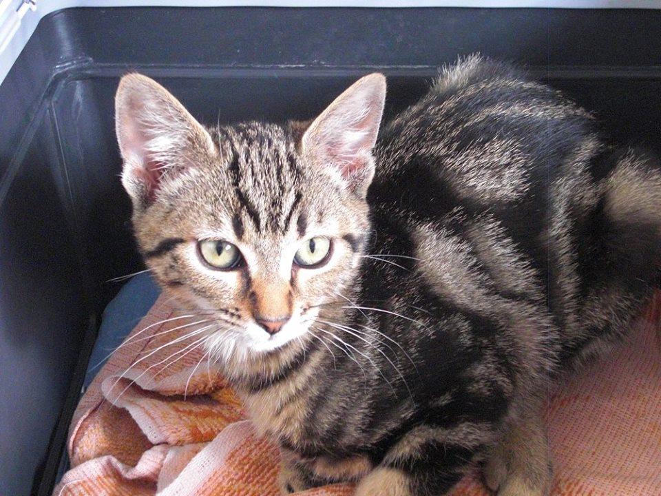 LEXIE - F - Née le 01/05/2015 - Adopté en août 2015