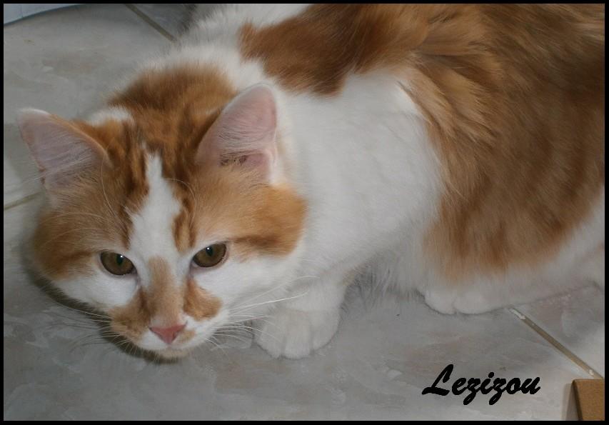 LEZIZOU - M - Né le 01/10/2015 - Adopté en Janvier 2017