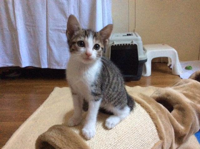 LIBERTY - M - Né le 01/05/2015 - Adopté en août 2015