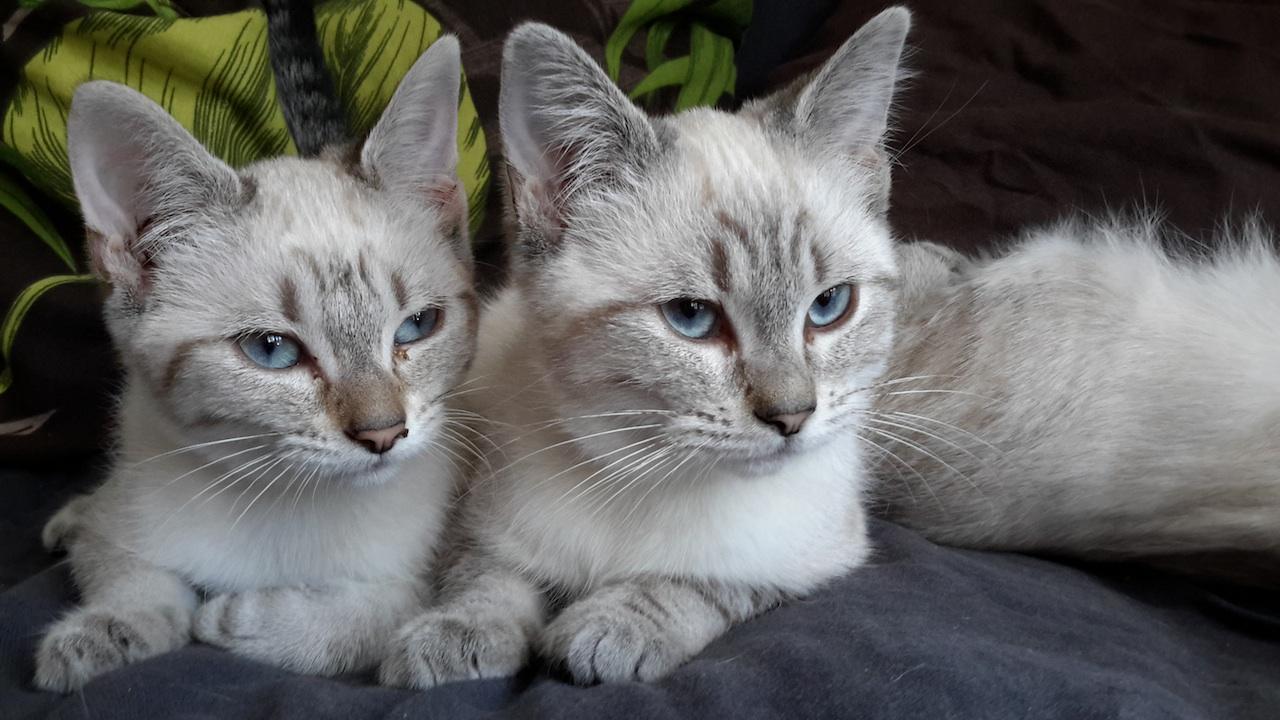 Liéta et Lanaï