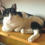 LILLYADE - Née le 15/04/14 - Adoptée en mai 2015