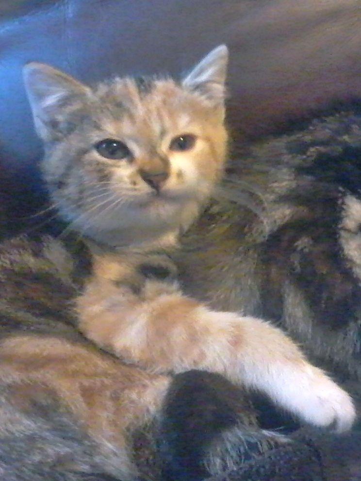LILY ROSE - F - Née le 15/02/2015 - Adoptée en mai 2015