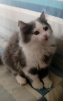 LILY - F - Née le 15/02/2015 - Adoptée en avril 2015