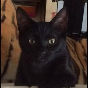 LIPSY - F - Née le 01/04/2015 - Adoptée en Décembre 2016