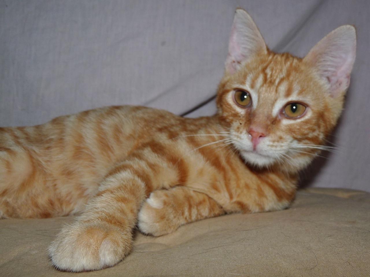 LIPTON - M - Né le 01/05/2015 - Adopté en nov 2015