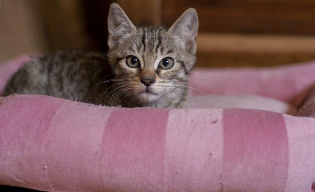 LOBO - M - Né le 27/08/2015 - Adopté en nov 2015