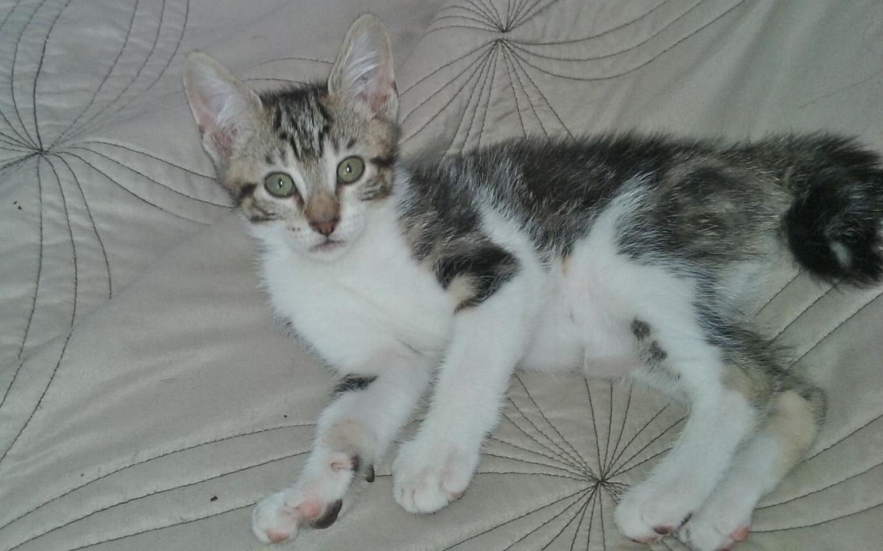 LOOMIS - M - Né le 30/05/2015 - Adopté en oct 2015