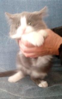 LORD - M - Né le 25/01/15 - Adopté en avril 2015