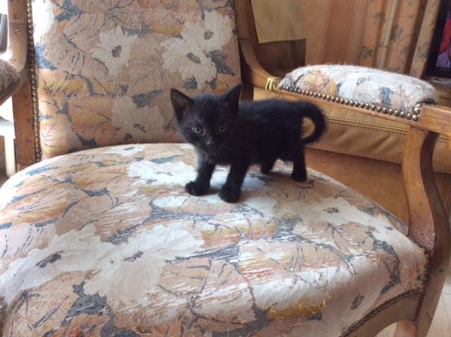 LORDSHA - M - Né le 01/05/2015 - Adopté en juillet 2015