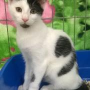 LORICOU - M - Né le 08/07/2015 - Adopté en mars 2016