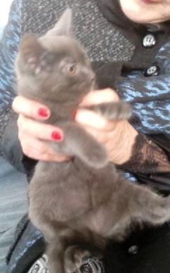 LOVE - F - Née le 25/01/2015 - Adoptée en avril 2015