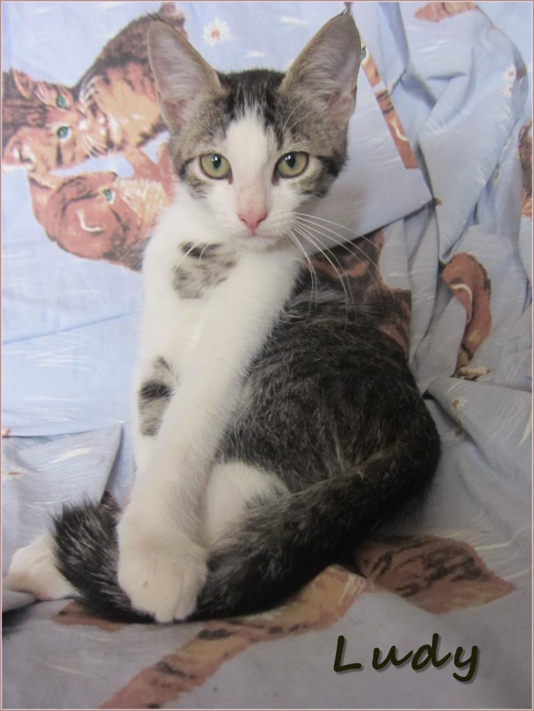 LUDY - M - Né le 01/07/2015 - Adopté en déc 2015