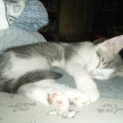 LUPIN - M - Né le 22/04/2015 - Adopté en sept 2015