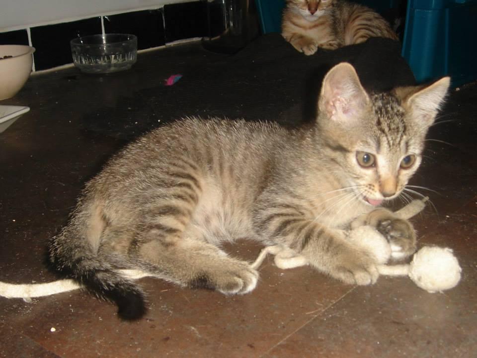LUTTI - F - Née le 12/05/2015 - Adoptée en nov 2015
