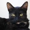 Lyu - F - Née le 1/6/2015 - Adoptée en décembre 2018