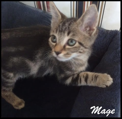 MAGE - F - Née le 20/08/2016 - Adoptée en Décembre 2016
