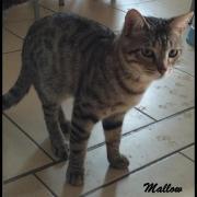 MALLOW - M - Né le 08/09/2015 - Adopté en Juillet 2017
