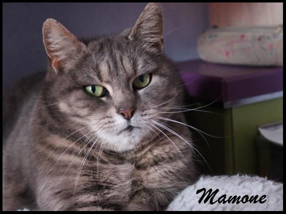 MAMONE - F - Née le 01/01/2008 - Adoptée en Janvier 2017