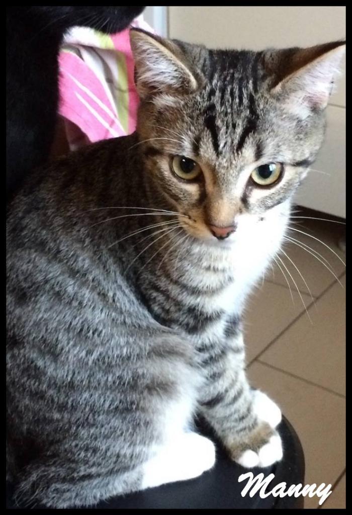 MANNY - M - Né le 17/04/2016 - Adopté en Décembre 2016