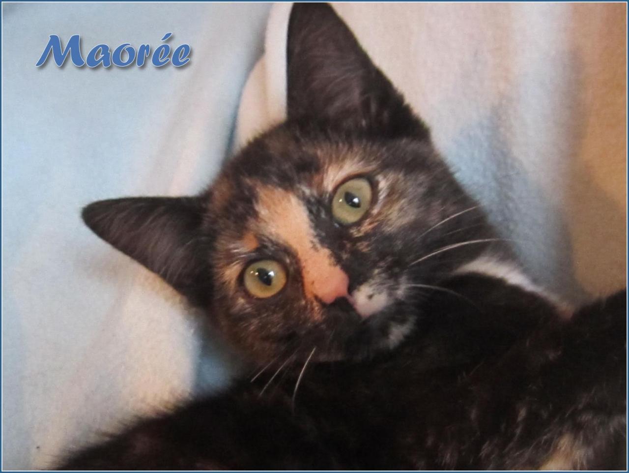 MAOREE - F - Née le 15/09/2016 - Adoptée en Février 2017