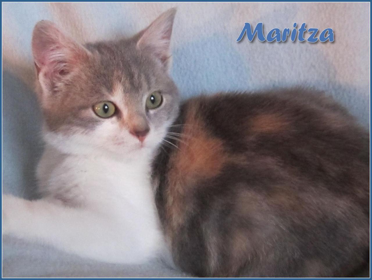 MARITZA - F - Née le 15/10/2016 - Adoptée en Février 2017
