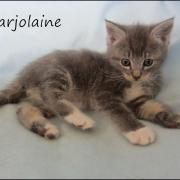 MARJOLAINE - F - Née le 23/03/2016 - Adoptée en juin 2016