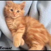 MARMOT - M - Né le 20/08/2016 - Adopté en Novembre 2016