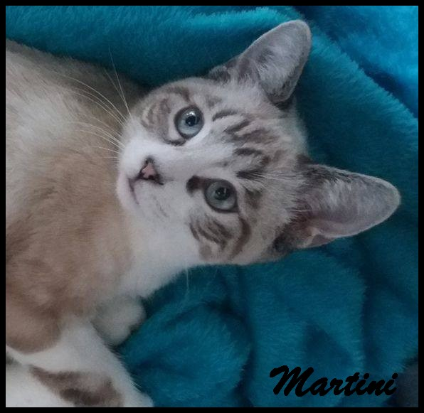 MARTINI - M - 11/04/2016 - Adopté en Septembre 2016