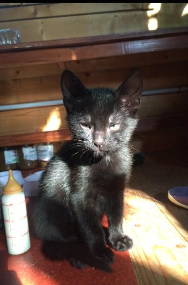 MARVEL - M - Né le 7/04/2016 - Adopté en juillet 2016