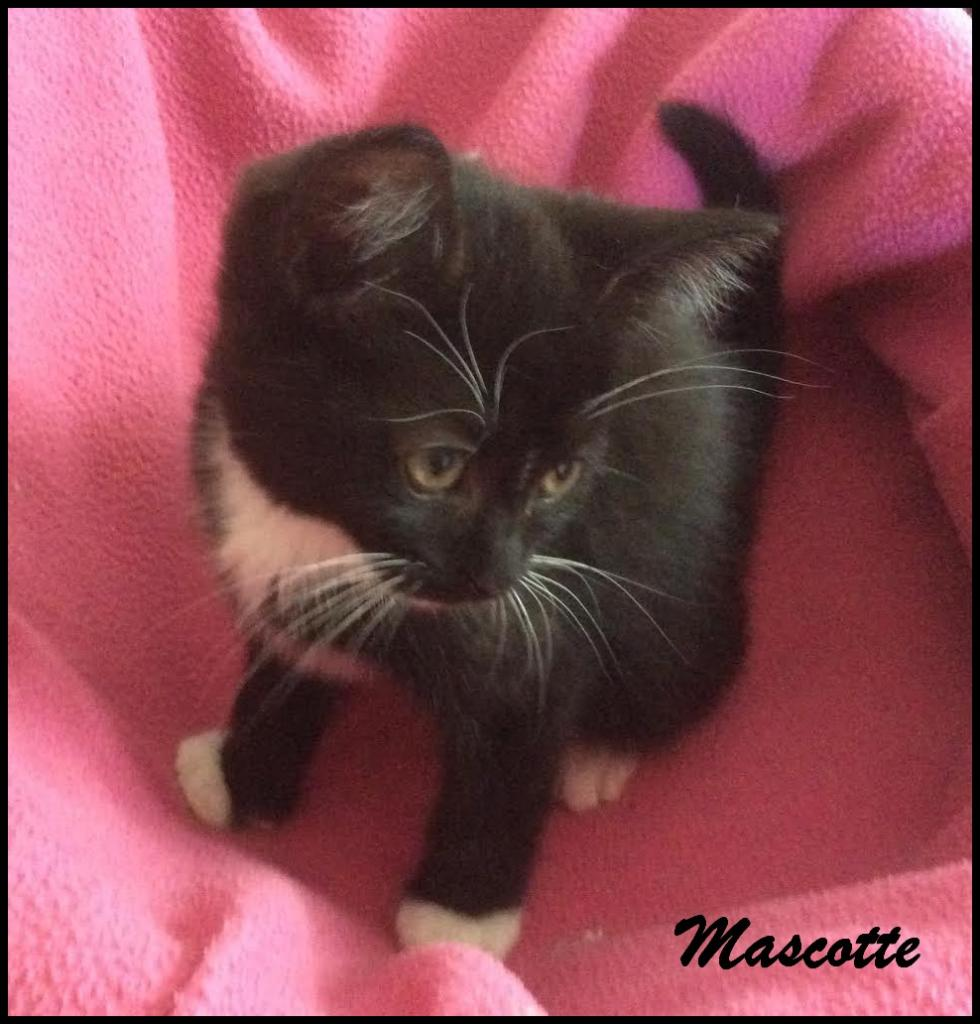 MASCOTTE - F - Née le 01/05/2016 - Adoptée en août 2016