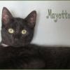 MAYOTTE - M - Né le 15/09/2016 - Adopté en Mai 2017