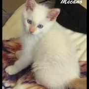 MECANO - M - Né le 05/05/2016 - Adopté en Octobre 2016