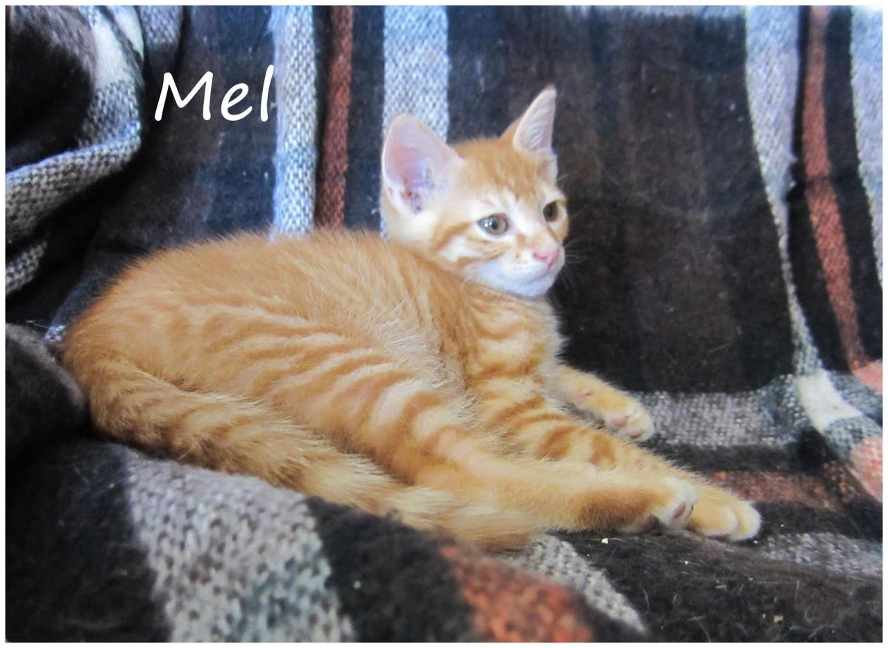 MEL - M - Né le 25/04/2016 - Adopté en août 2016
