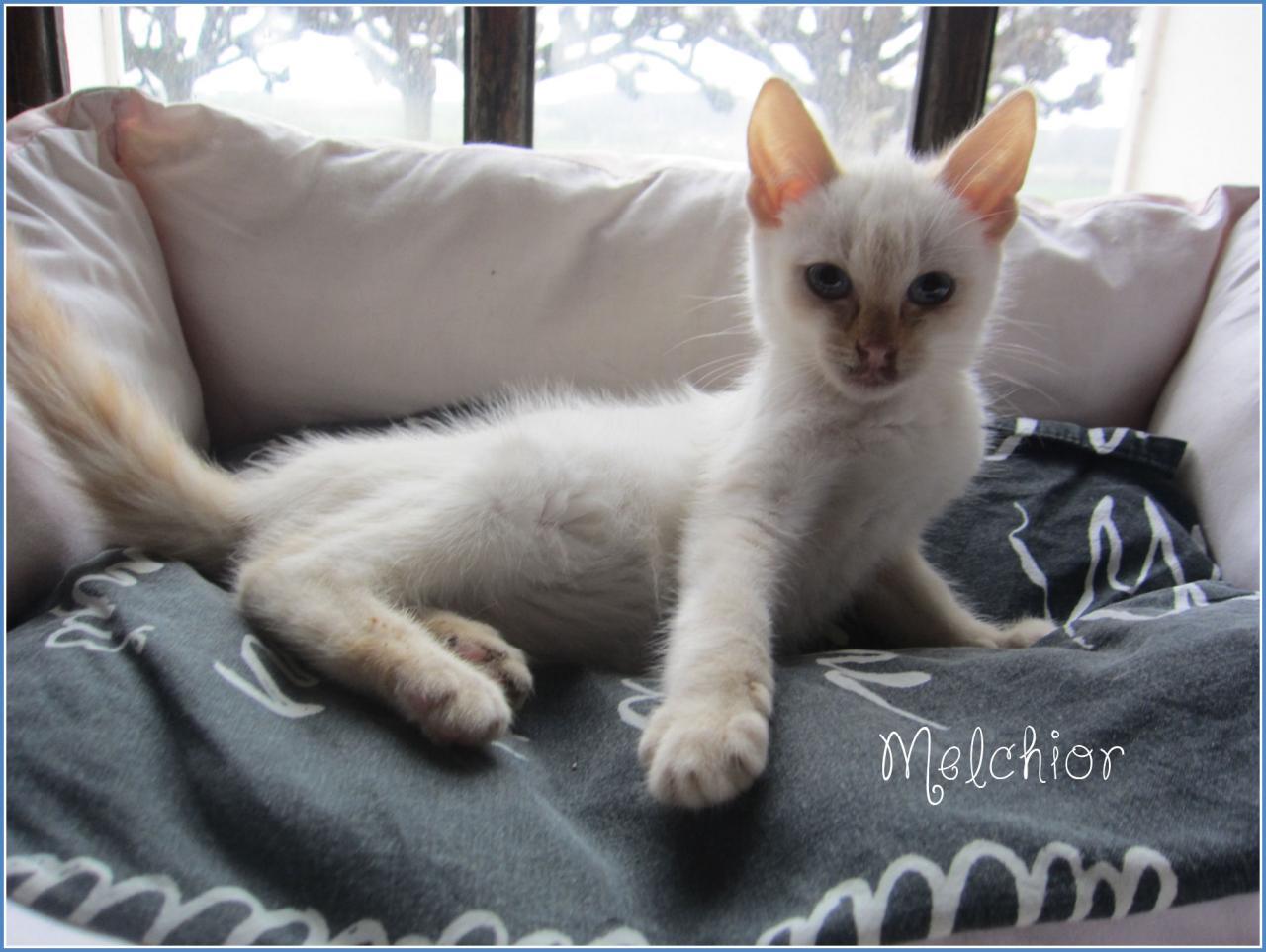 MELCHIOR - M - Né le 25/10/2015 - Adopté en janvier 2016