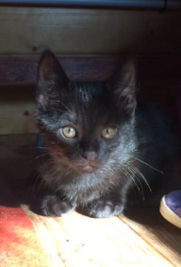 MELISSE - M - Né le 7/04/2016 - Adopté en Octobre 2016