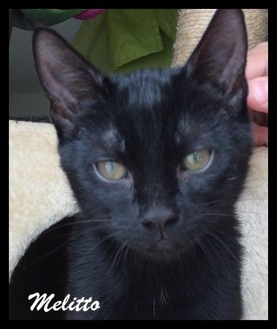 MELLITO - M - Né le 20/03/2016 - Adopté en Mai 2017