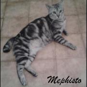 MEPHISTO - M - Né le 01/06/2015 - Adopté en juillet 2016